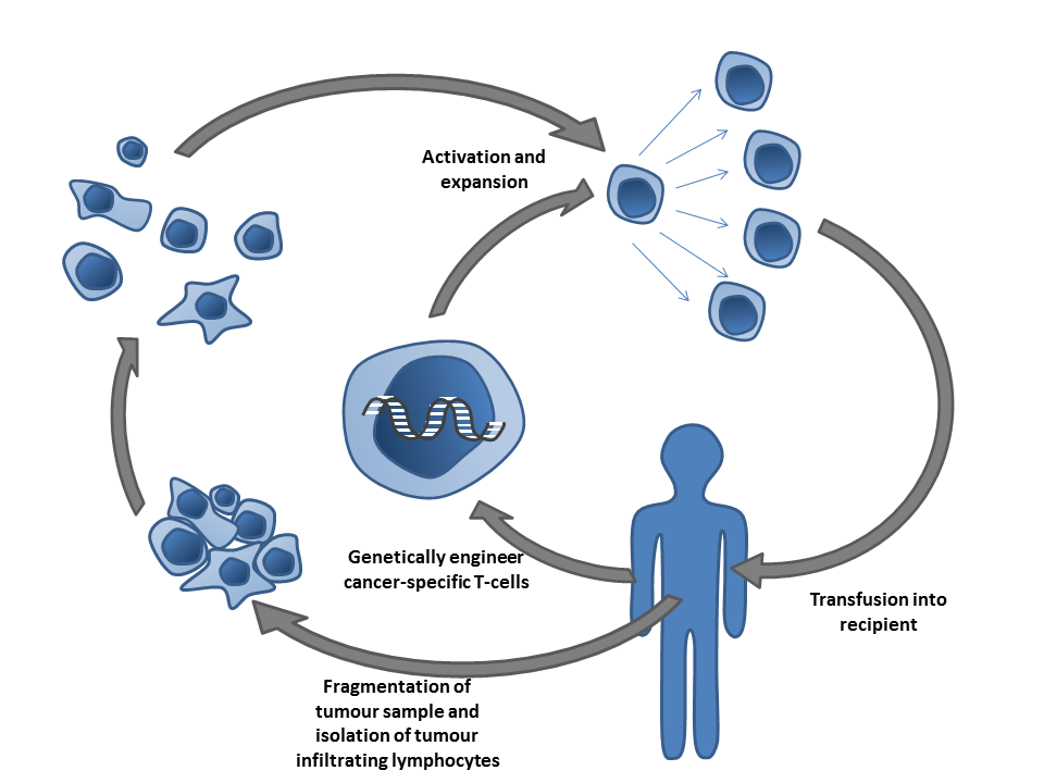 """Adoptive T-cell therapy"" by Simon Caulton 