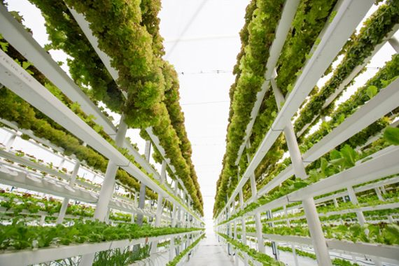 Sowing the seeds for a vertical farming revolution