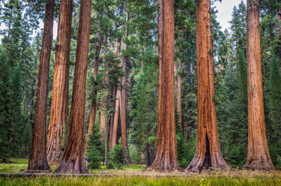 Six big things: Sequoia's year of massive IPOs continues?uq=kiHouaul