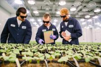 Scoop: Indigo Agriculture targets up to $300M in upcoming round