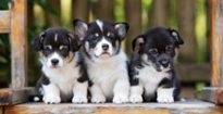 The dog days aren't over: Investors hounding deals in pet sector