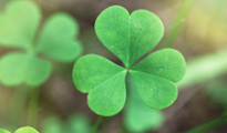 Luck of the Irish: Shamrock Capital and the 146% IRR