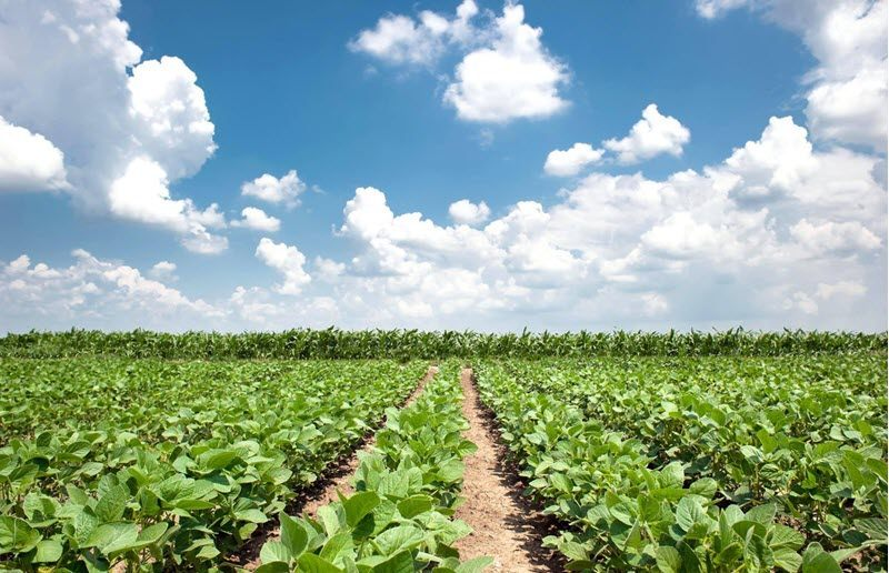 Indigo Agriculture has announced that it's raised a $250 million Series E. The funding values the company at $3.45 billion and puts 2018 on pace for a decade high in terms of VC invested in US agtech.